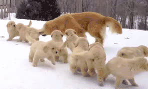 snow pets GIFs