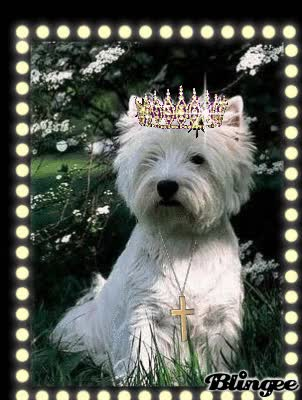 Watch King Westie GIF on Gfycat. Discover more related GIFs on Gfycat