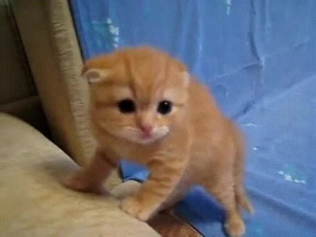 Watch and share Cute GIFs by JustViral.Net on Gfycat