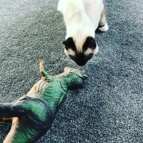 cats, T-rex toy GIFs