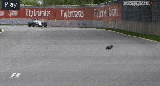 auto racing, f1, formula 1, formula one, Formula 1 Hog GIFs