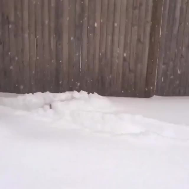 Watch and share The Floor Is Cocaine GIFs by likkaon on Gfycat