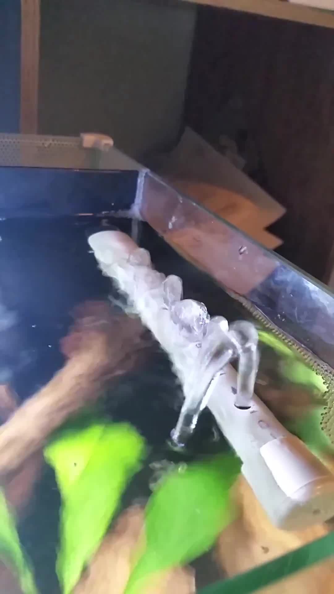 aquariums, bettafish, High flow 1/8 bit GIFs