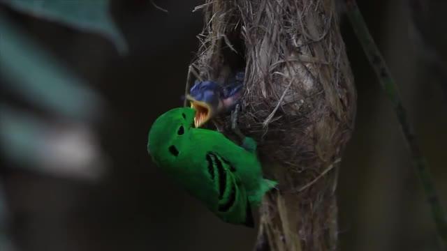 Watch and share Naturegifs GIFs by likkaon on Gfycat