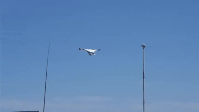Watch and share This Seagull Gliding Against The Wind GIFs on Gfycat