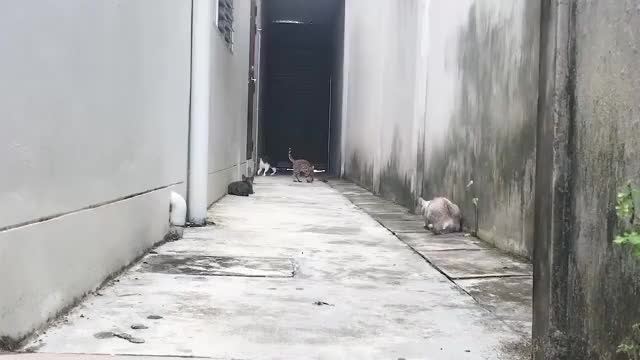 Watch Ninja cat cornered in an alley GIF by @aerowen on Gfycat. Discover more Alley, Cats, Kitty funny run, Mitch Sterling, People & Blogs, Run, Video., Viral, in GIFs on Gfycat