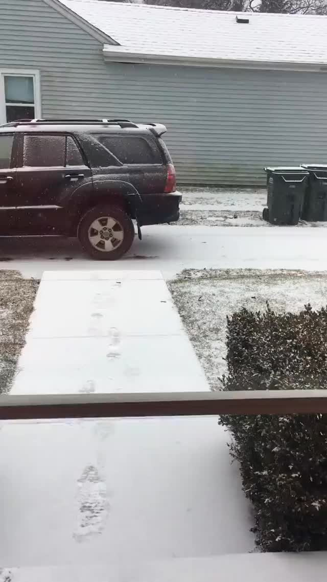 Watch Nope, not going in that snow GIF by sil130 on Gfycat. Discover more related GIFs on Gfycat
