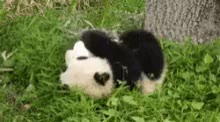 Watch and share Panda GIFs by kate__4 on Gfycat