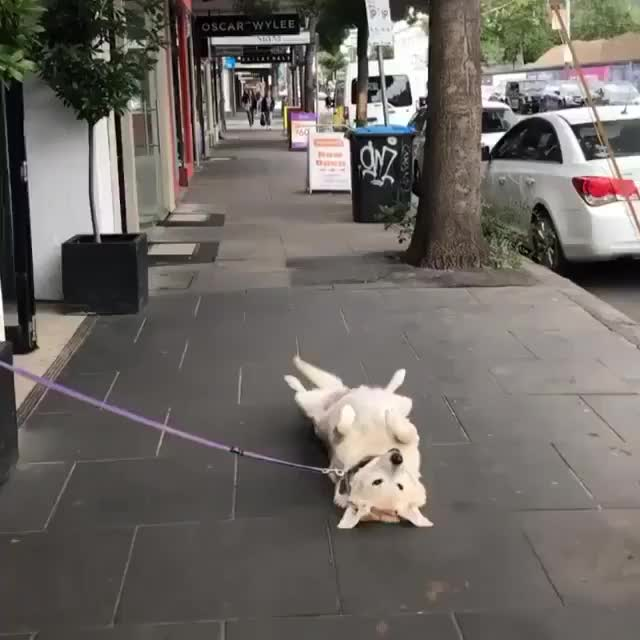 Watch and share Dogs Videos GIFs and Dogstagram GIFs by Kristina  on Gfycat