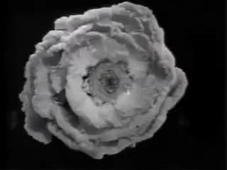 Watch Busby Berkeley GIF on Gfycat. Discover more Busby Berkeley GIFs on Gfycat