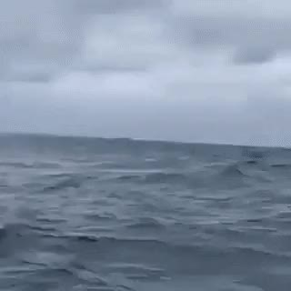 Watch and share Humpback Whale Breaching GIFs on Gfycat