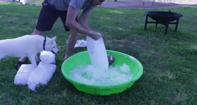 Watch and share Husky GIFs and Pool GIFs on Gfycat