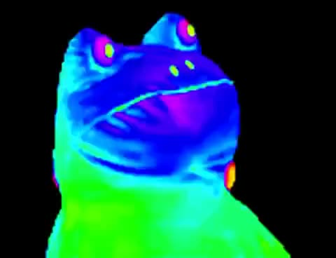 Watch and share MLG Frog Meme GIFs on Gfycat