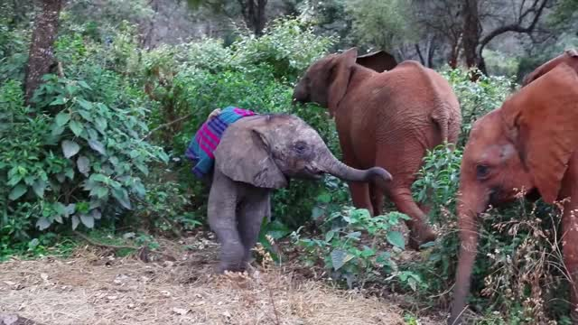 Watch and share Angela Sheldrick GIFs and Elephant Rescue GIFs by PM_ME_STEAM_K3YS on Gfycat