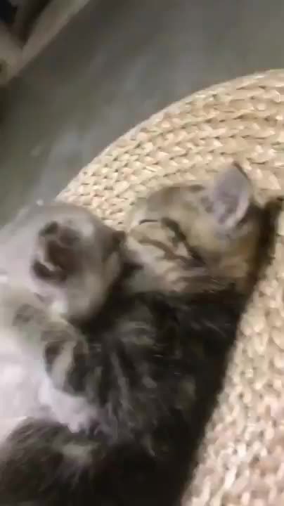 Watch and share Kittens GIFs by Mecha熊 ✔️  on Gfycat