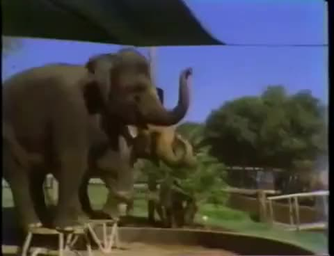 Watch Jazzercize Elephant GIF on Gfycat. Discover more aerobics, elephant, exercise GIFs on Gfycat