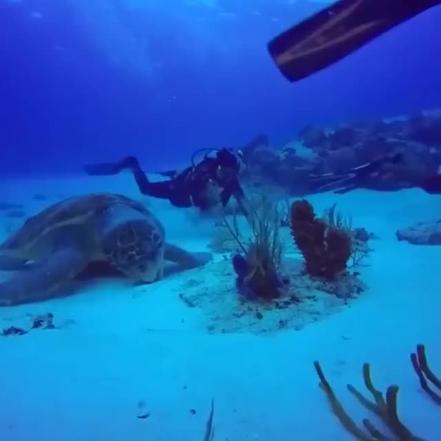 Watch and share Turtle GIFs by Yuyu on Gfycat