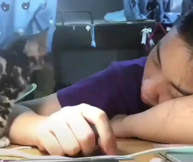 Watch and share Cuddle GIFs and Kitten GIFs by teistom on Gfycat