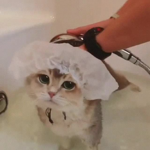Watch and share Bath GIFs on Gfycat