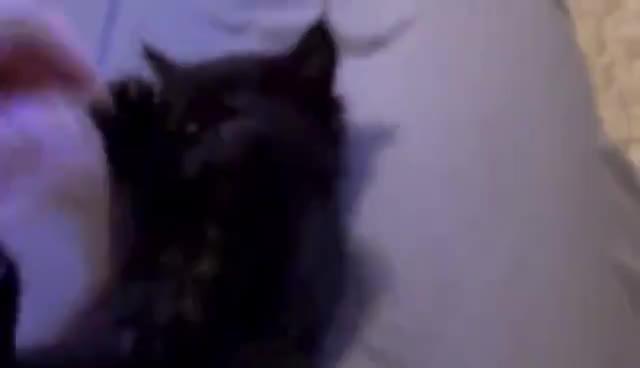 Awwwwwwwwwwwwwwwwww!, Kitten GIFs