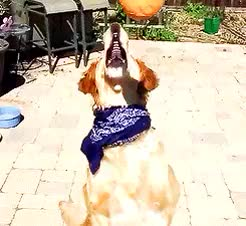 Watch Grappling hook! GIF on Gfycat. Discover more *, animals, by dylan, dogs, gif GIFs on Gfycat