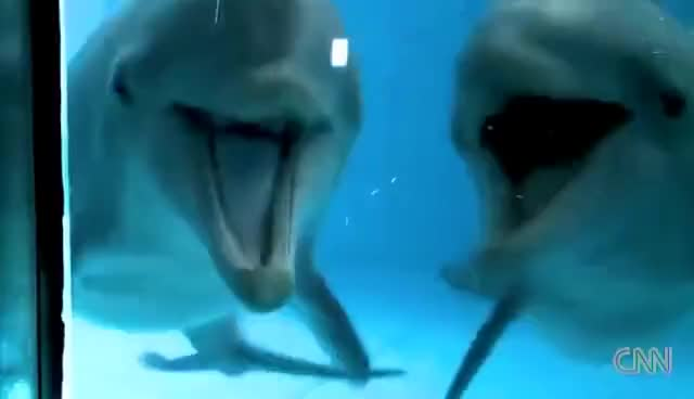 Watch and share Dolphins GIFs and Dolphin GIFs on Gfycat