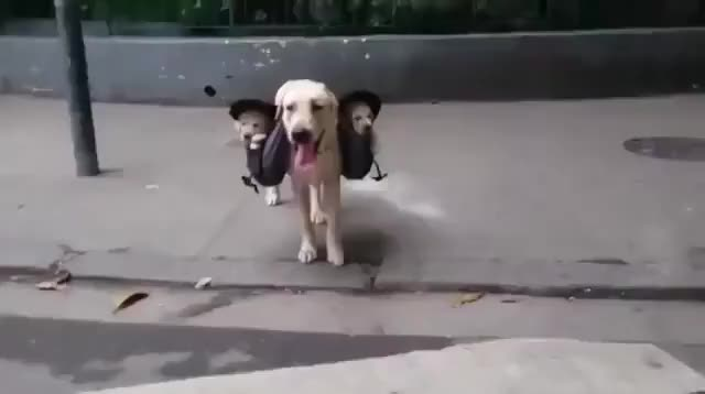 Watch and share Dog GIFs by likkaon on Gfycat