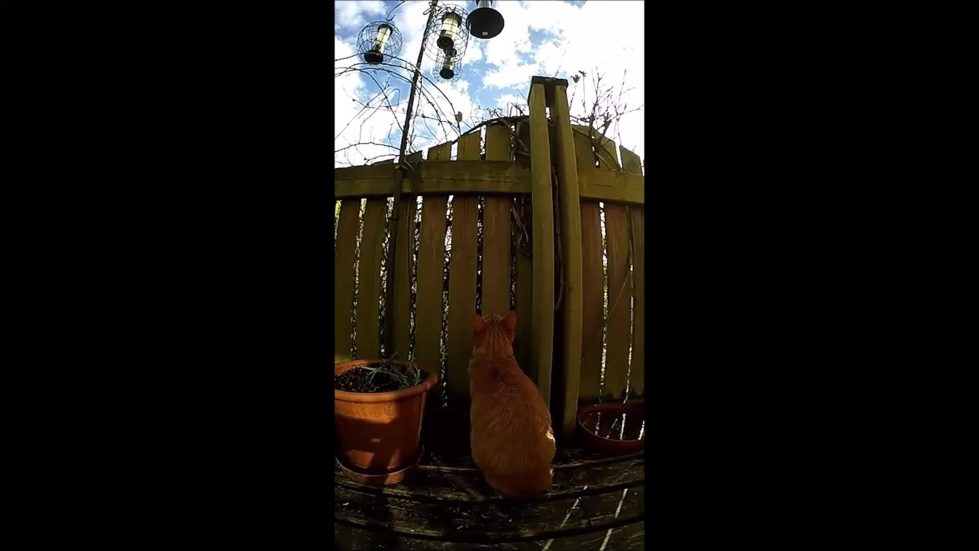natureismetal, woahdude, My cat getting primal (reddit) GIFs