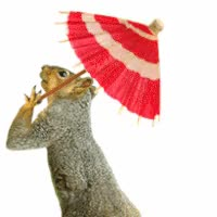 Watch and share Squirrel With Parasol GIFs on Gfycat