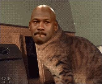 CatSlaps, gif_to_gyf, doc rivers GIFs