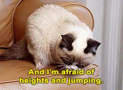 Watch no grumpy cat GIF on Gfycat. Discover more related GIFs on Gfycat