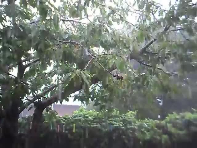 Watch Lluvia GIF on Gfycat. Discover more lluvia, lluvia en mar del plata, rain GIFs on Gfycat