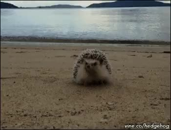 Watch and share Animal Planet GIFs on Gfycat