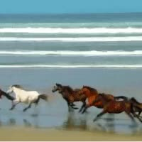 Watch and share Wild Horses Running GIFs on Gfycat