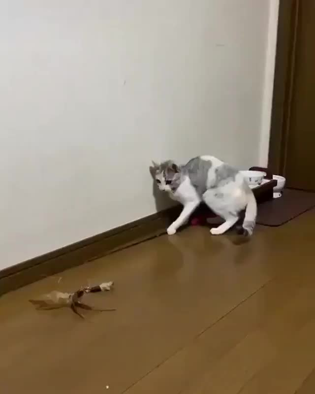 Watch and share Catoftheday GIFs and Catstagram GIFs by Teguh Muhammad Wahyudi on Gfycat