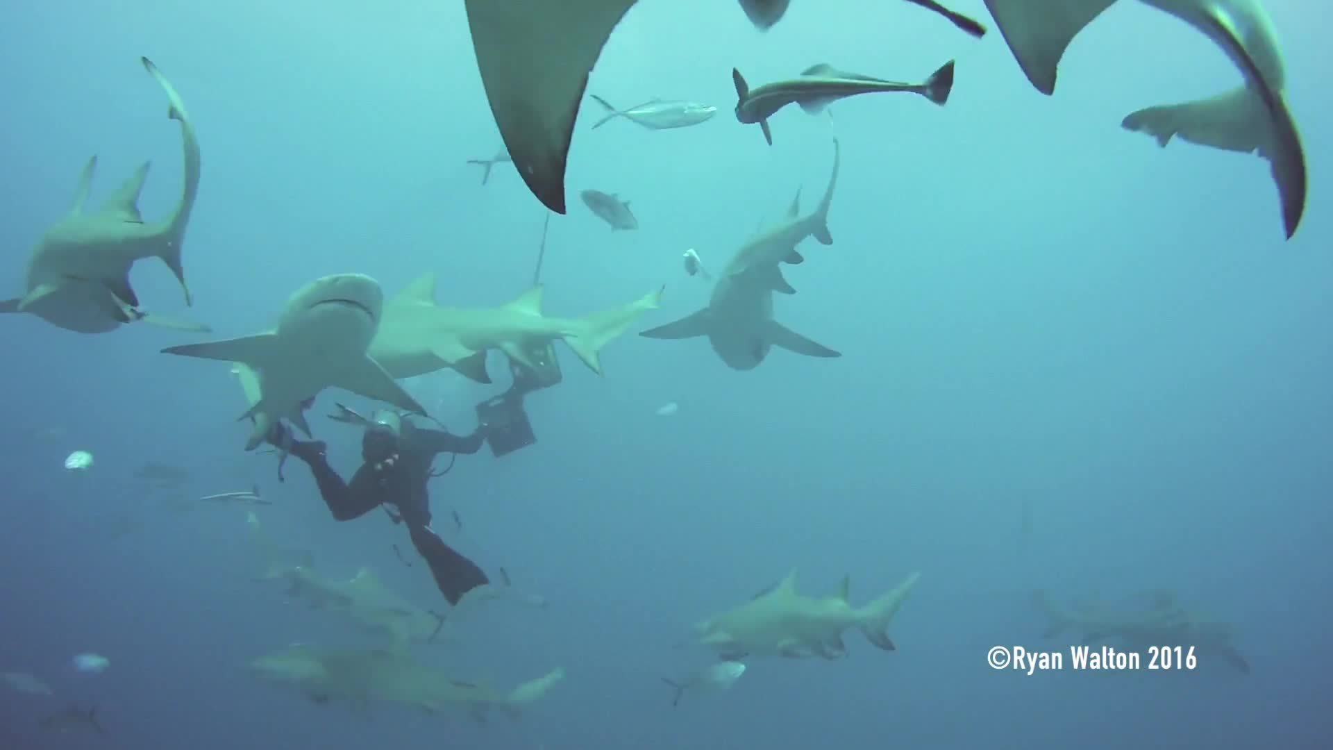 gifs, sharks, thedepthsbelow, Swimming midwater with about a dozen sharks surrounding you. GIFs