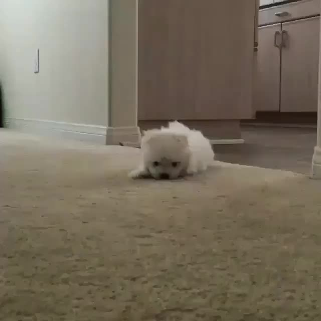 Watch Sneaky Snowball GIF on Gfycat. Discover more aww GIFs on Gfycat