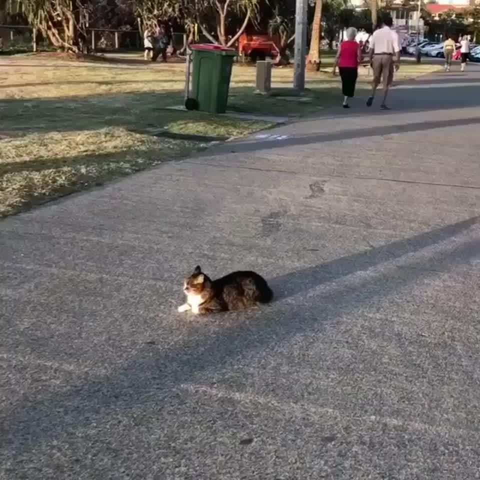 cat, gato GIFs