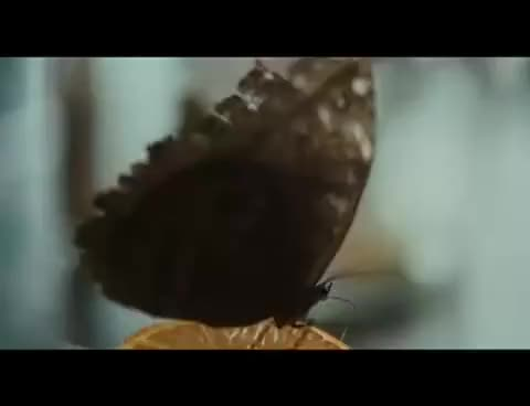 Watch Butterflies GIF on Gfycat. Discover more butterflies GIFs on Gfycat