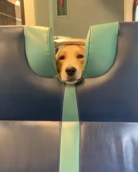 Watch and share A Train Seat With A Special Feature GIFs by ImaAnimal on Gfycat