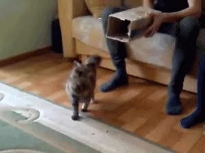 Watch and share Коты GIFs by LincesaMdq on Gfycat