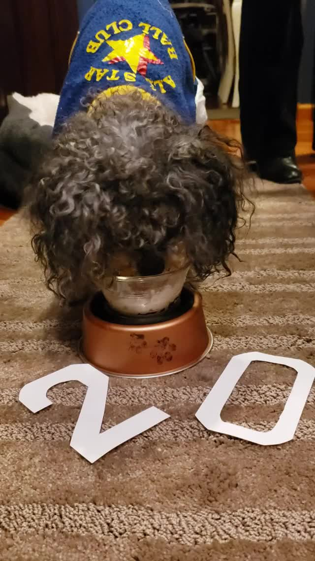 Watch Shadow's 20th birthday dessert GIF by Danny Sweeney (@otterdevastation) on Gfycat. Discover more Dog, old dog, puppy, birthday, dessert GIFs on Gfycat