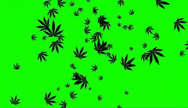 Watch and share Chuva De Cannabis #1 - Rain Of Cannabis #1 [Fundo Verde - Green Screen] GIFs on Gfycat