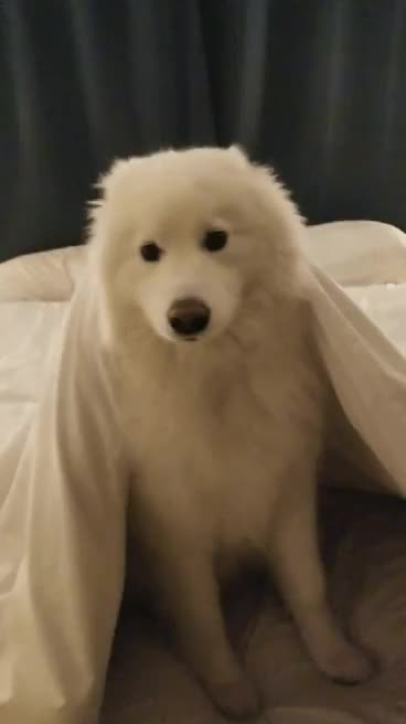Watch and share 4 Year Old Puppy GIFs by likkaon on Gfycat