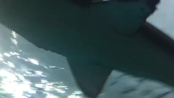 Watch Shark GIF by @dvanha on Gfycat. Discover more related GIFs on Gfycat