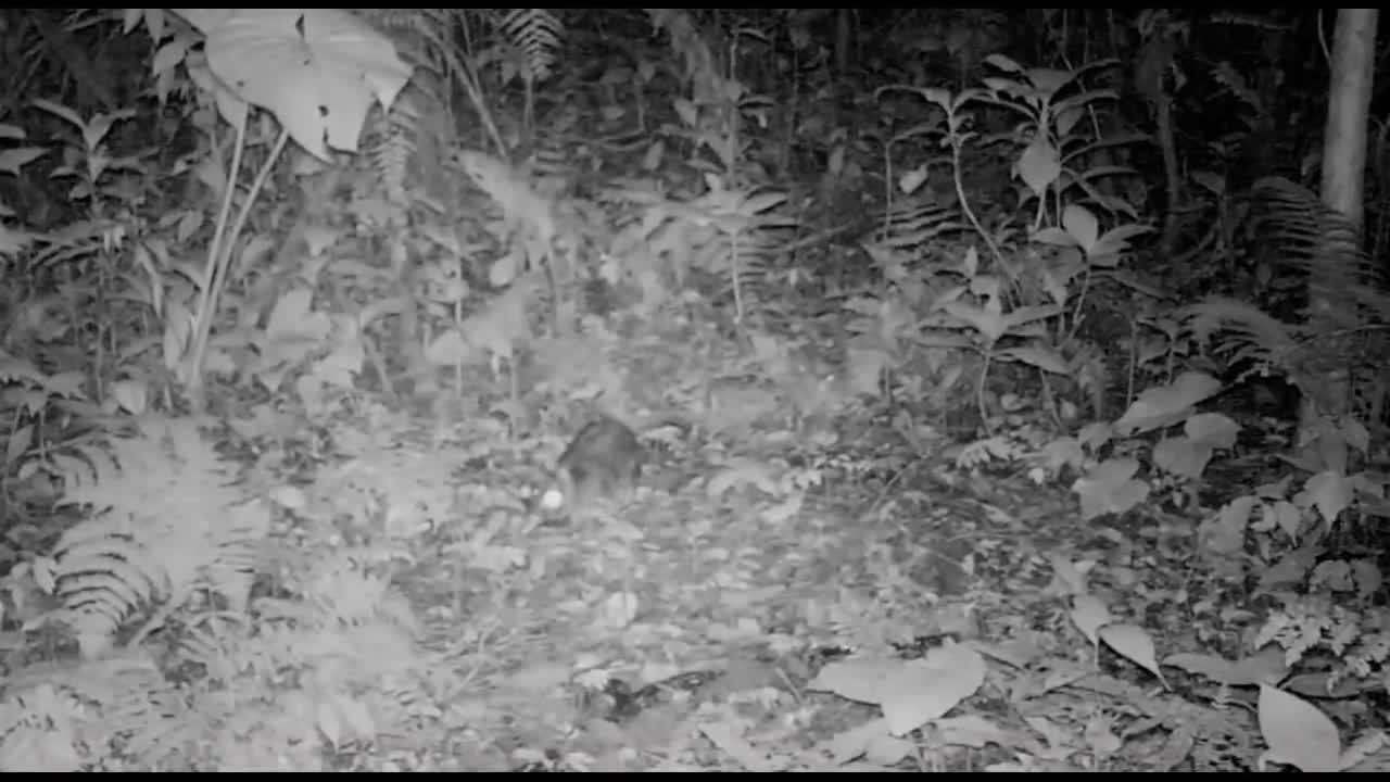 Sumatran rabbit GIFs