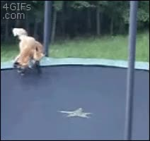 Watch and share Fox Cubs Discover Trampoline GIFs on Gfycat