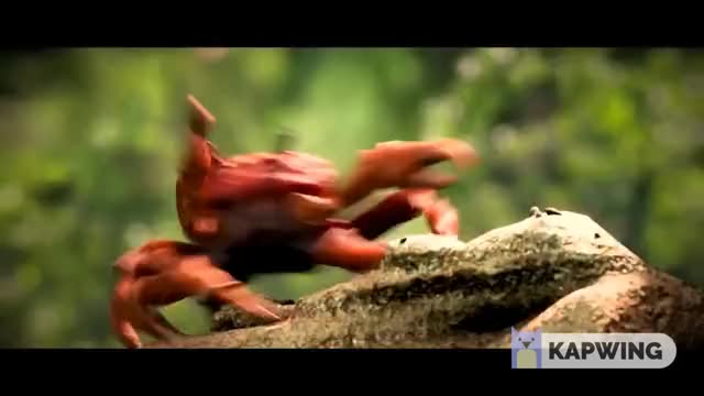 Watch Crab Rave GIF by @csquared_ on Gfycat. Discover more related GIFs on Gfycat