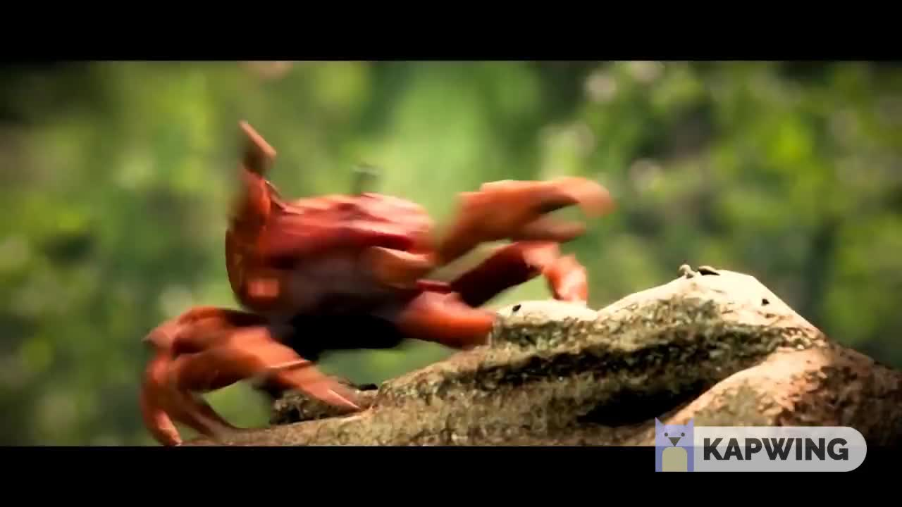 Crab Rave Gifs Search   Search & Share on Homdor