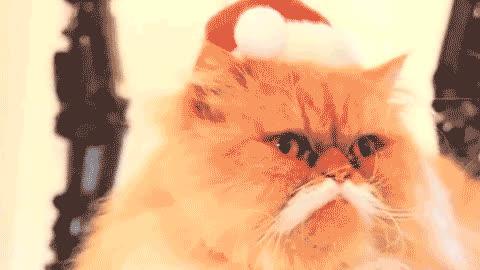 christmas, happy christmas, happy holidays, holiday, merry christmas, xmas, christmas eve christmas gif GIFs